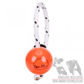 Large Hard Plastic Dog Ball with Multi Power-Clip Top-Matic for Bulldog