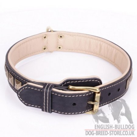 "English Bulldog Leather Collar ""Pyramid"" with Nappa Padding and Brass Details"