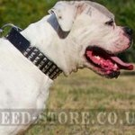 American Bulldog Collar with 3 Rows of Pyramid Studs, Leather
