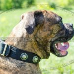 Dog Collar for Boxer Walking and Training of Nylon with Conchos