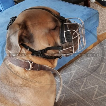 Basket Dog Muzzle of Wire for Bulldogs, Best for Daily Use