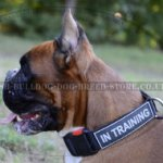 Training Collar for Boxer with Patches and Quick-Detach Buckle