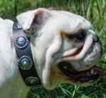 Fashion Dog Collar Vintage Studs and Blue Stones for Bulldog