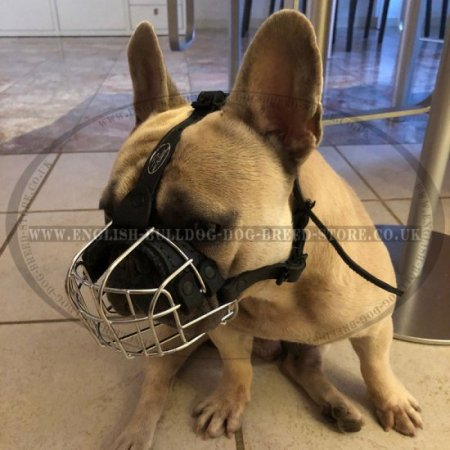 Bestseller! Wire Dog Muzzle for French Bulldog, Perfect for Daily Use