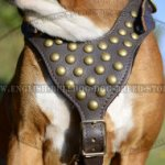 Best Walking Harness for Boxer Dog, Leather with Brass Studs