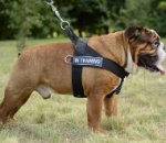 English Bulldog Harness Nylon for Training, Work and Walking