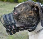 Leather Dog Muzzle for American Bulldog, Mesh Design