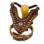Studded Dog Harness and Padded Collar - Set for English Bulldog