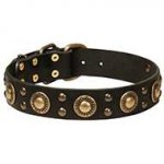 """Gold Knight"" Modern Leather Dog Collar for English Bulldog"