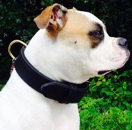 Collars for English Bulldog