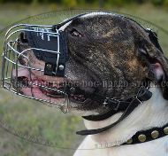 wire basket muzzle for bulldog