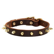 Bulldog Collar of Pure Leather with Row of Goldish Brass Spikes