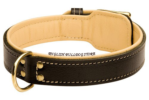 Bulldog Collar UK