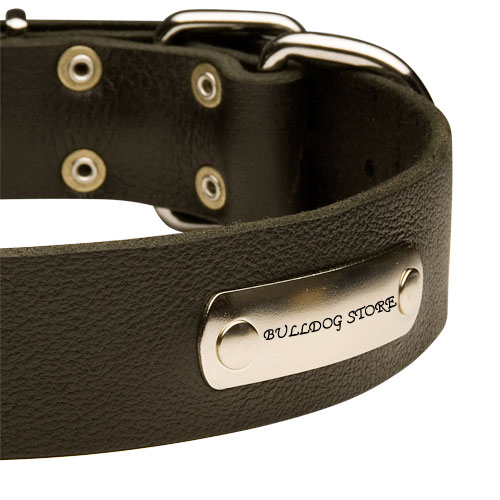 leather collar with ID tag for english bulldogs