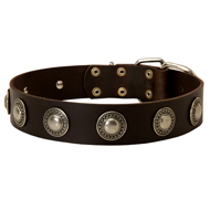 Fashionable Leather Dog Collar with Vintage Conchos for Bulldog