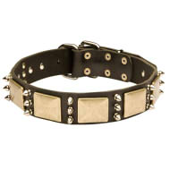 Bulldog Leather Collar with Silver-Like Spikes and Brass Plates