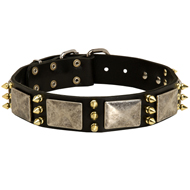 Bulldog Collar with Brass Spikes and Silver Coloured Plates