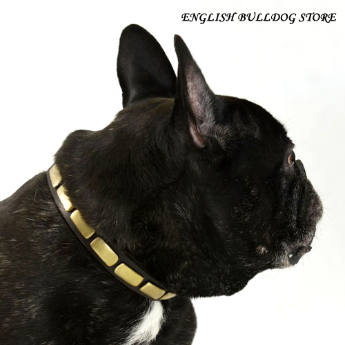 French Bulldog Dog Collar