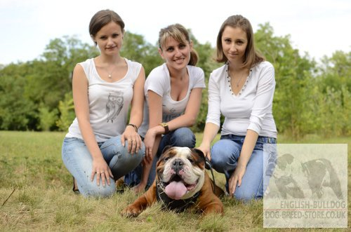English Bulldog Leather Harness