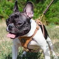Royal Leather Dog Harness for French Bulldog, Small Dog Harness