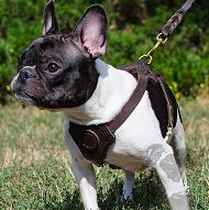 Small Leather Dog Harness Soft Padded for French Bulldog