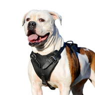 Dog Training Harness of Strong Leather for American Bulldog