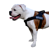 Nylon Dog Harness for American Bulldog Training and Working