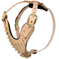 Amazing Harness with Gold-Like Brass Spikes for English Bulldog