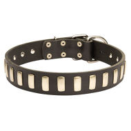Handmade Dog Collar with Row of Brass Plates for British Bulldog