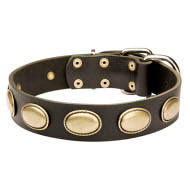 Retro Dog Collar for English Bulldog with Oval Brass Plates