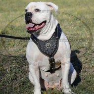 Padded Leather Dog Harness for English Bulldog