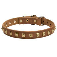 Dog Collar Designer with Square Brass Studs for English Bulldog