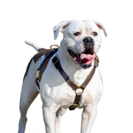 American Bulldog Harness for Walking, Training and Tracking