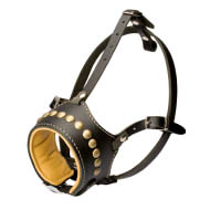 Padded Dog Muzzle with Brass Studs for English, Ambulldog