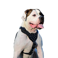 Spiked Leather Dog Harness for American Bulldog Walking in Style