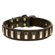 Stylish Dog Collar Leather and Nickel Plates for English Bulldog