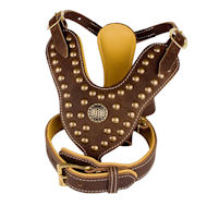 Studded Leather Harness & Collar Set for English Bulldog