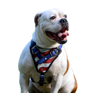 Custom Painted Harness for American Bulldog in USA Style