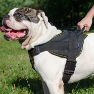 American Bulldog Harness of Strong Nylon, Multipurpose Use