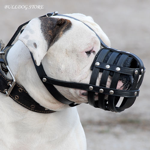 How to Muzzle a Bulldog