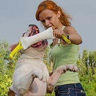 American Bulldog Training Bite Tug of Fire Hose for Young Dogs