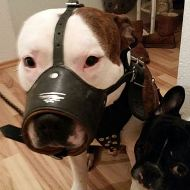 American Bulldog Leather Muzzle Nappa Padded Inside, Open Nose