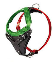 Measure Dog for a Harness