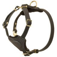 Boston Terrier Harness of Leather, Suitable Even for Puppies