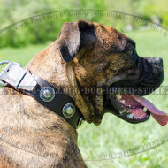 Boxer Leather Dog Collar with Vintage Conchos for Daily Use