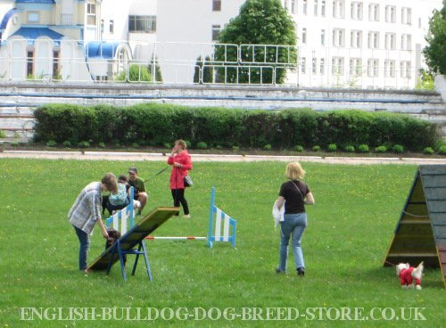 Dog Agility Seesaw UK