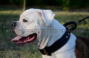 Bulldog Collars for Sale