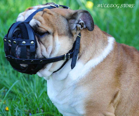 English Bulldog Muzzles UK