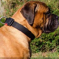 Bullmastiff Collar of Nylon Adjustable, Quick-Release Buckle