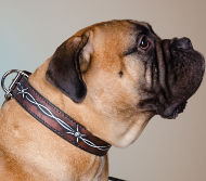 Bullmastiff Dog Collar with Barbed Wire Hand Painting on Leather